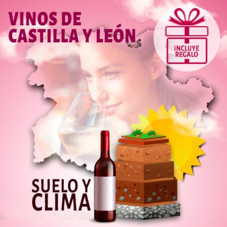 Curso online de los Vinos de Castilla y León