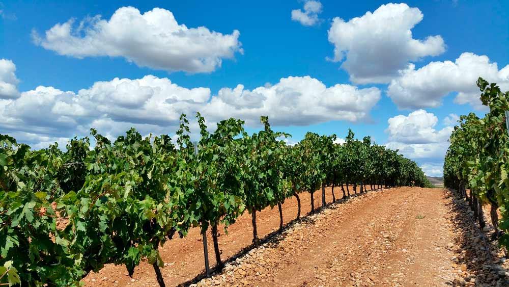 suelo vinos de españa