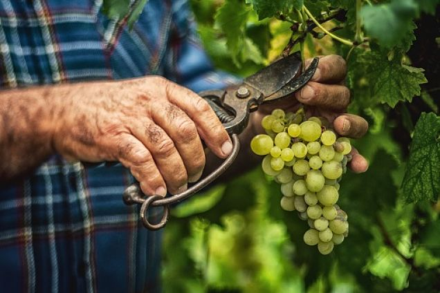 convertirse en un viticultor